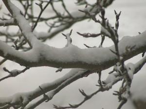 snow-on-tree-1534379-639x478